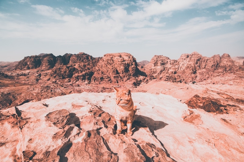 photo of a cat in the desert