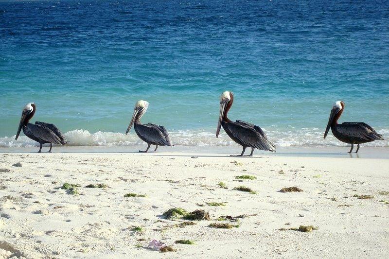 Playas paradisíacas: nuestras playas favoritas Venezuela