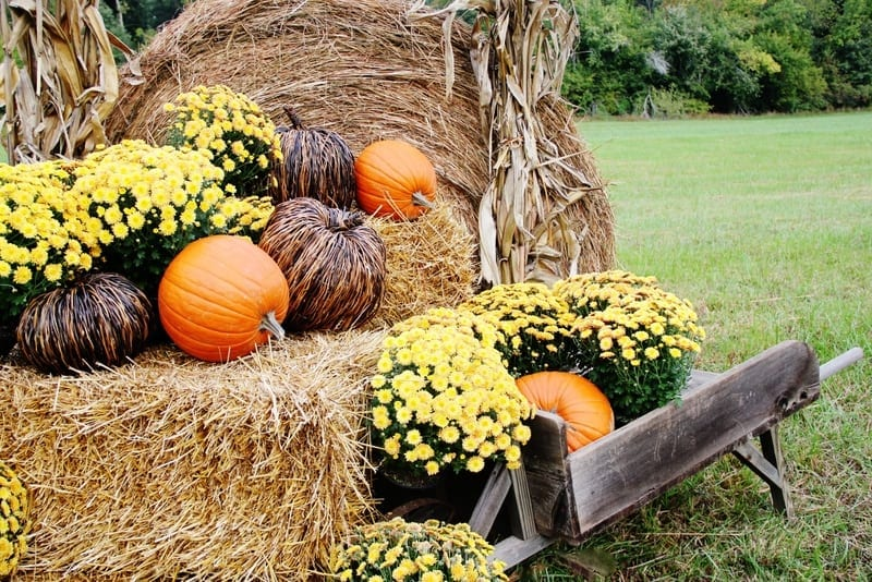 decorating-outside-for-fall