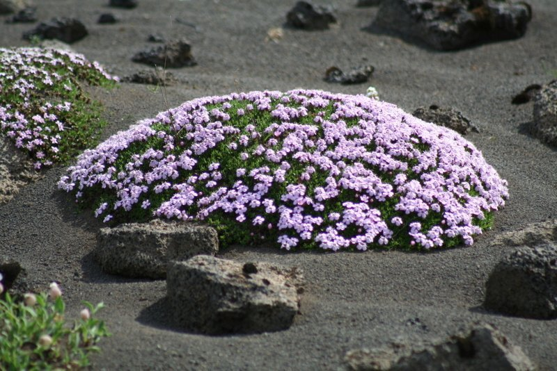 Best-of-North-Iceland - Plants-in-the-interior.jpg