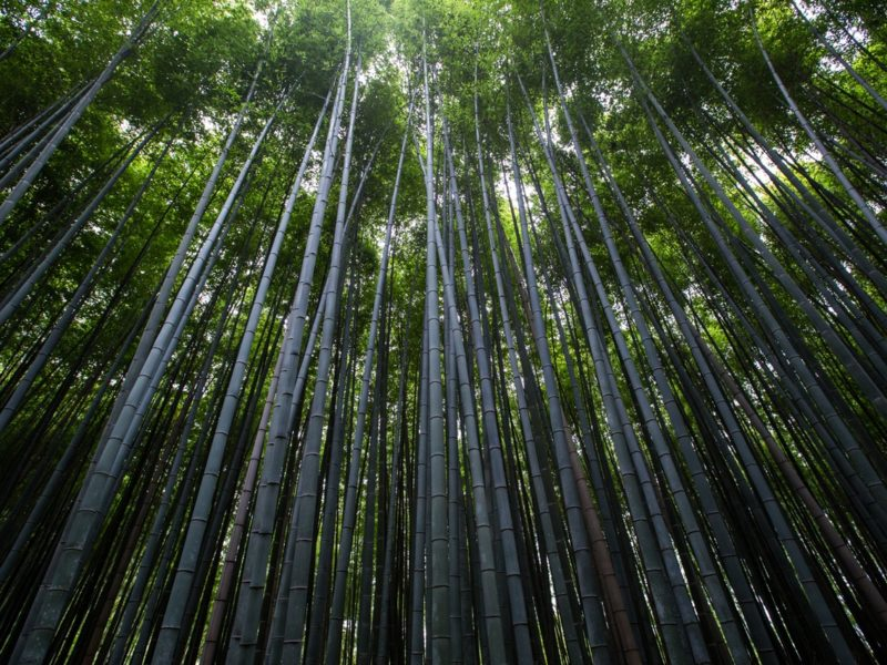 detecpa.2 - ventajas tarima de bambú