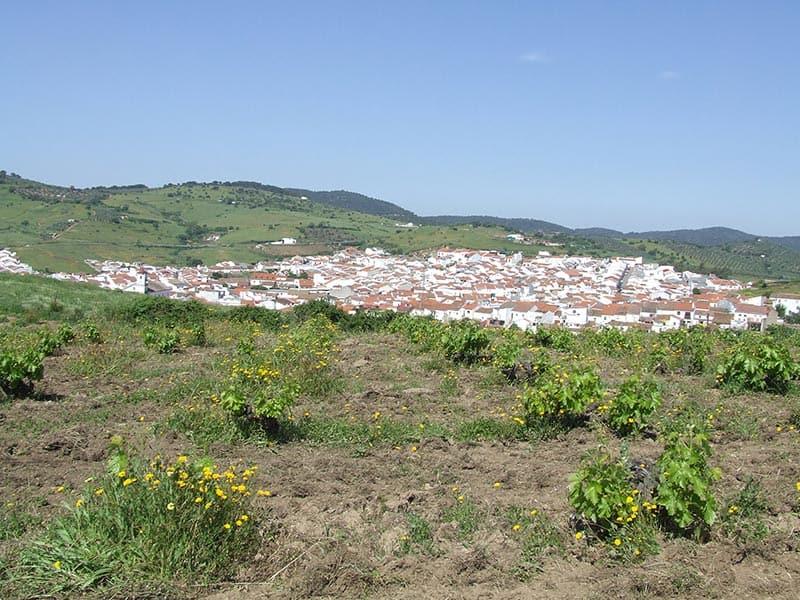 Villaviciosa de Córdoba - Bodegas Gómez Nevado