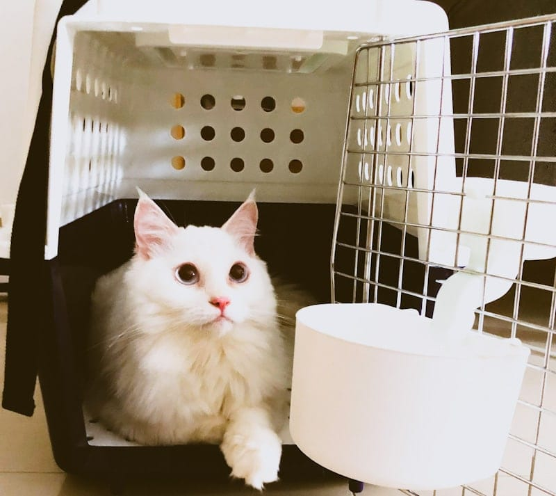 Image of a cat chilling inside a cat carrier at home