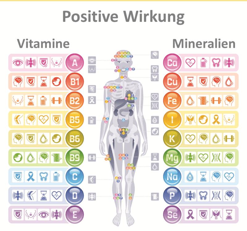 Die richtige Dosierung von Vitaminen, Mineralien und Spurenelementen ist lebensnotwendig und wirkt an den unterschiedlichsten Stellen im Körper.