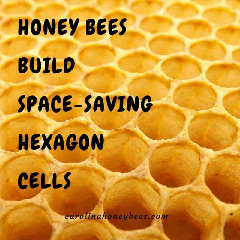 Honeycomb - bees build hexagon cells- honey bee facts