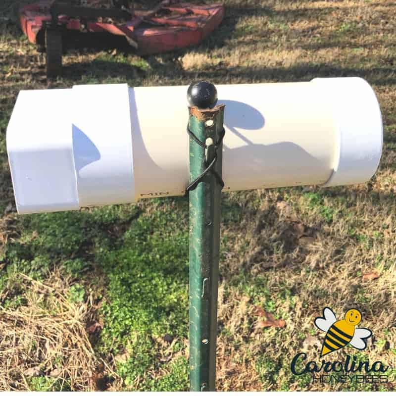 PVC pollen feeder hanging on fence post