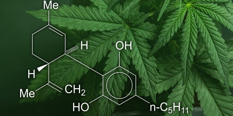 Why You Should Join the CBD Rush and Become an Affiliate, CBD Medical Journal
