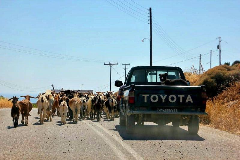road goats