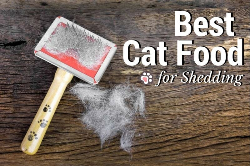 Best Cat Food for Shedding: What To Look For & Options To Consider