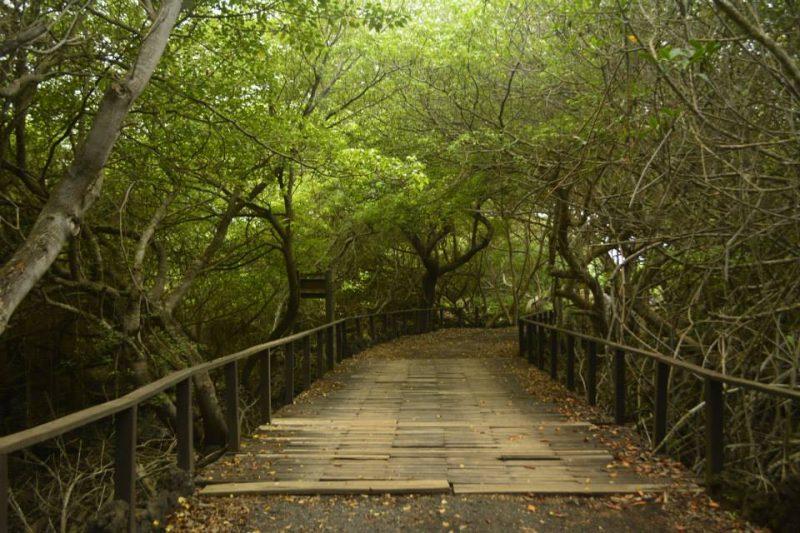 Isla Isabela areas verdes
