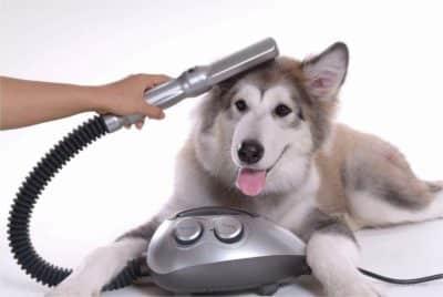 offerta soffiatore cane silenzioso