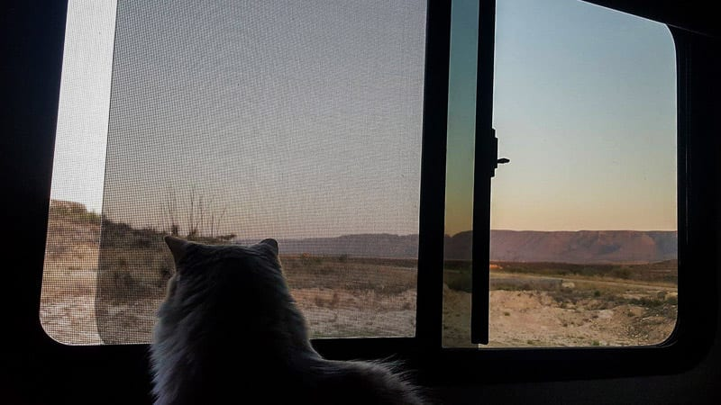 Our RV cat Sugar looking out the window