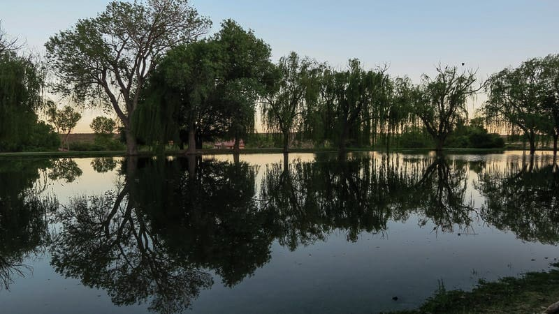 Pond with reflections of weeping willows