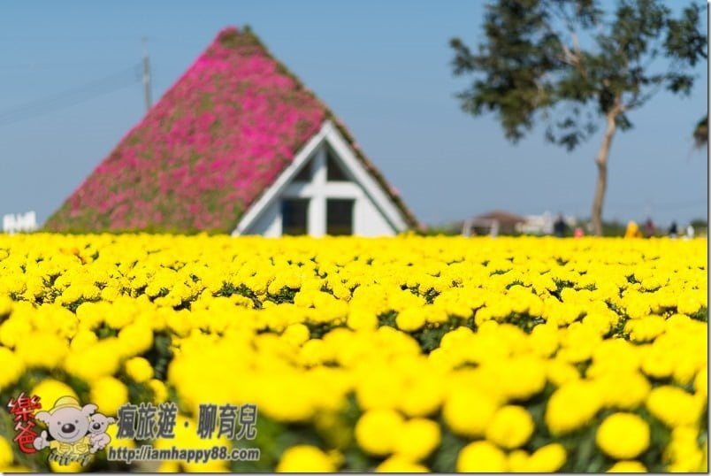 20170122-DSC_9255-flowerjs-s