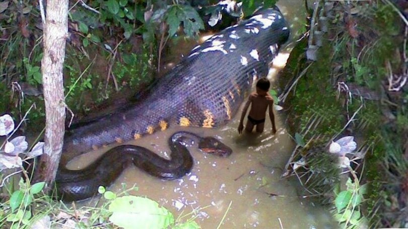 Pics of the biggest snake in world