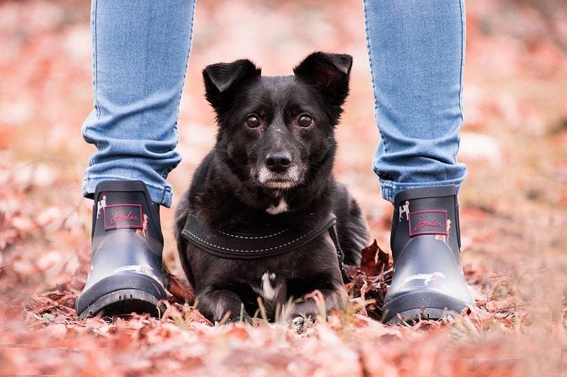 Berufliche Umorientierung mit Hund