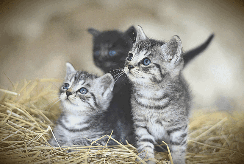 New Kitten List: Survive The First 24 Hours