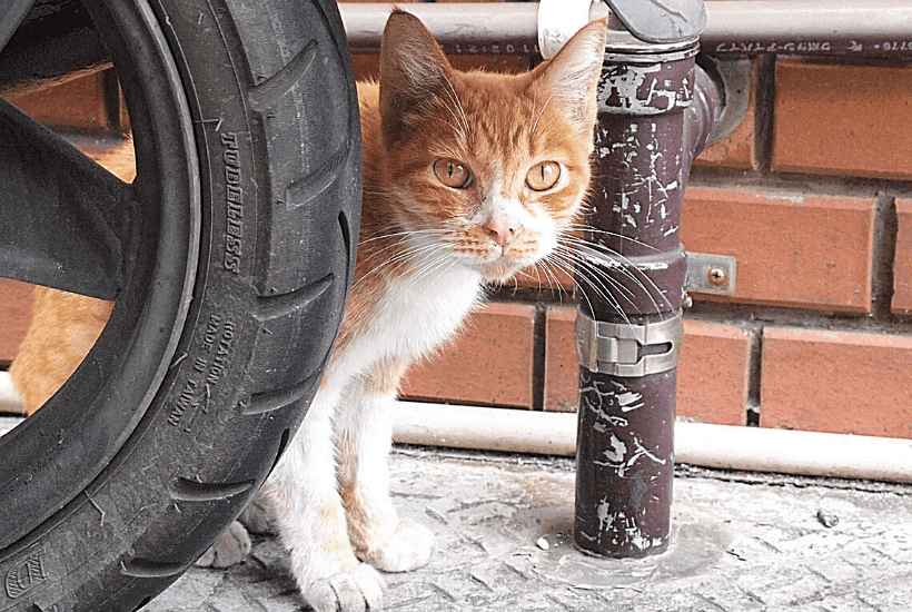 Male Cat Spraying: Why They Do It And How To Stop It