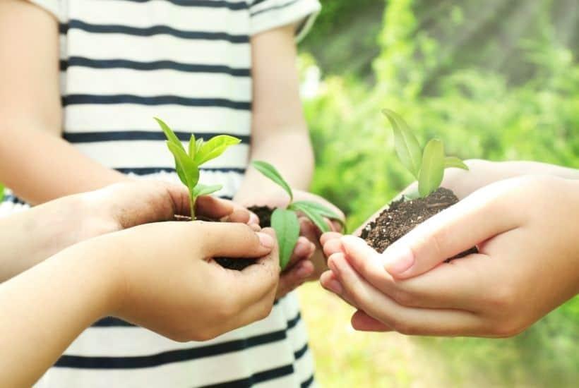 DIY Garden Ideas For Kids