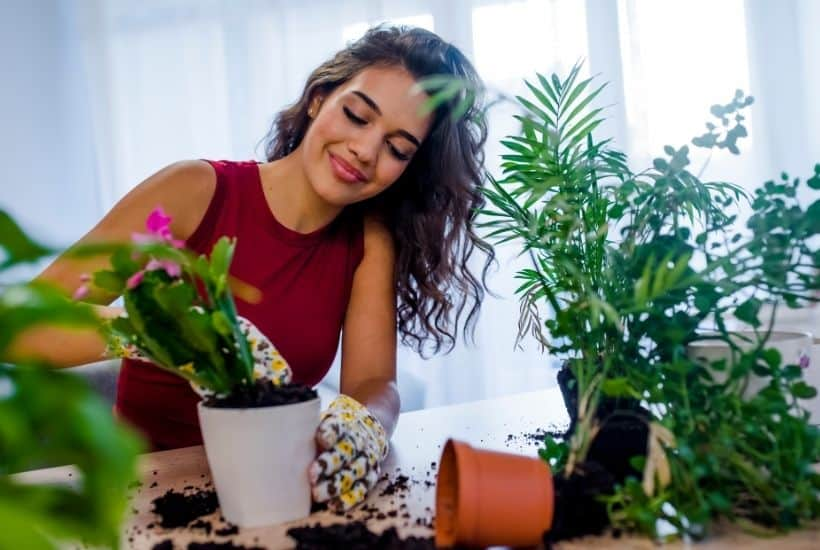 Easy Care Houseplants feature