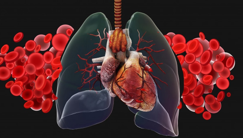 lungs-and-iron-cells