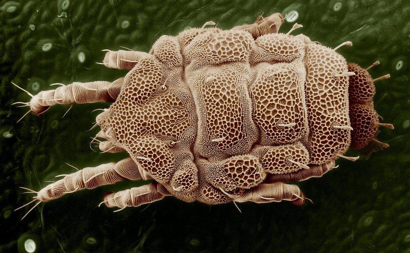 Parasieten kunnen huidklachten veroorzaken.