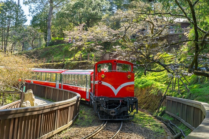 The Alishan Forest Railway passing by some cherry blossoms in winter