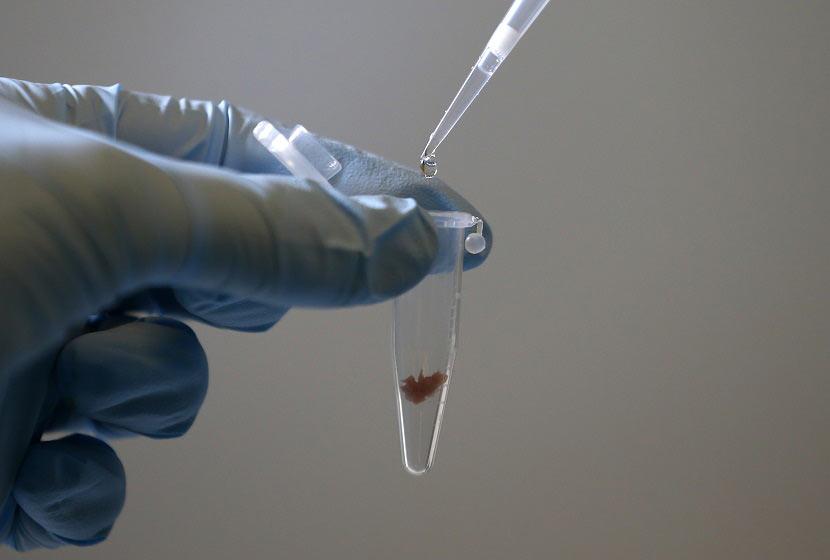 bio-innovation et biogeeks