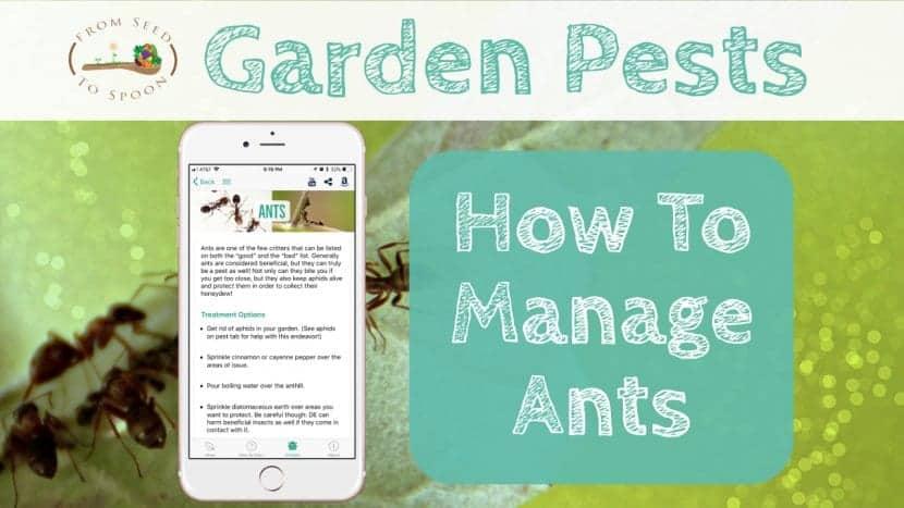 Ants blog post