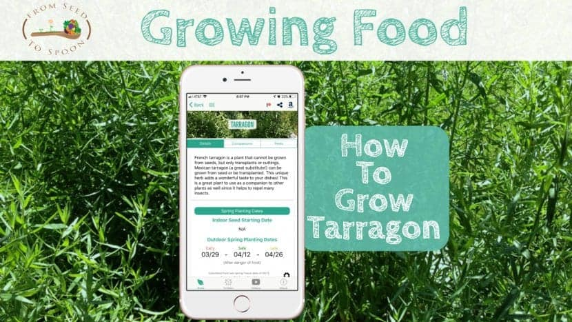 Tarragon blog post
