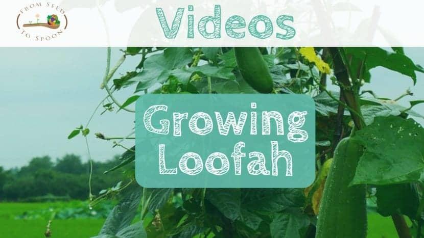 Loofah video