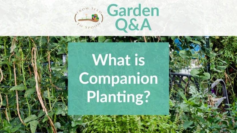 Q&A_ Companion Planting