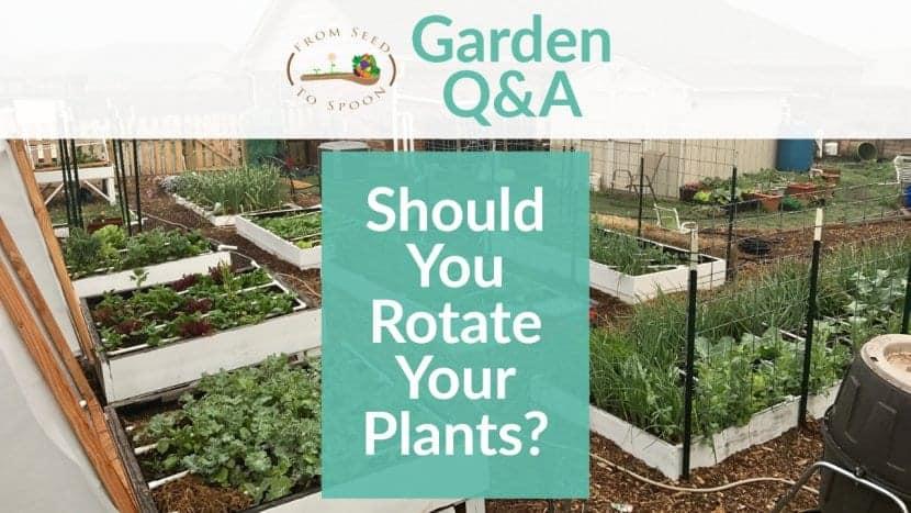 Q&A_ Rotating Crops