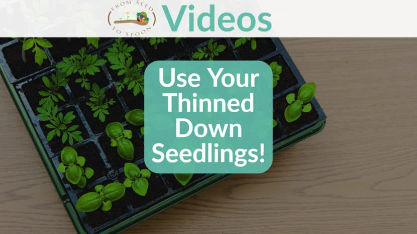 Thinned Down Seedlings