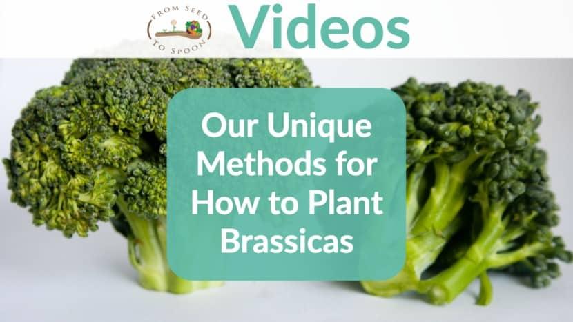 Brassica video