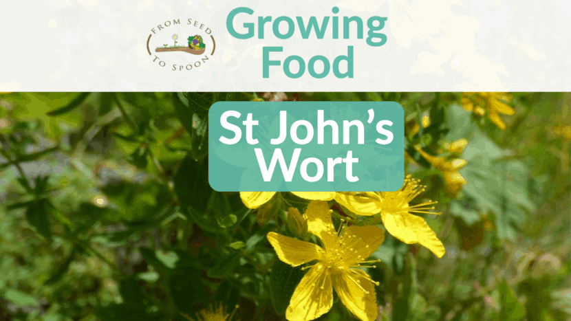 St John's Wort blog post