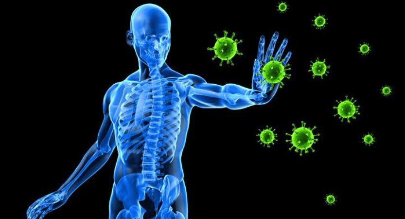 Imunski Sistem? Posvetite se mu čim več …
