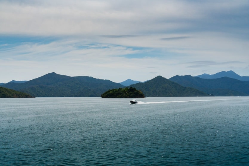 boat passing an island in queen charlotte sound mail boat cruise in picton new zealand