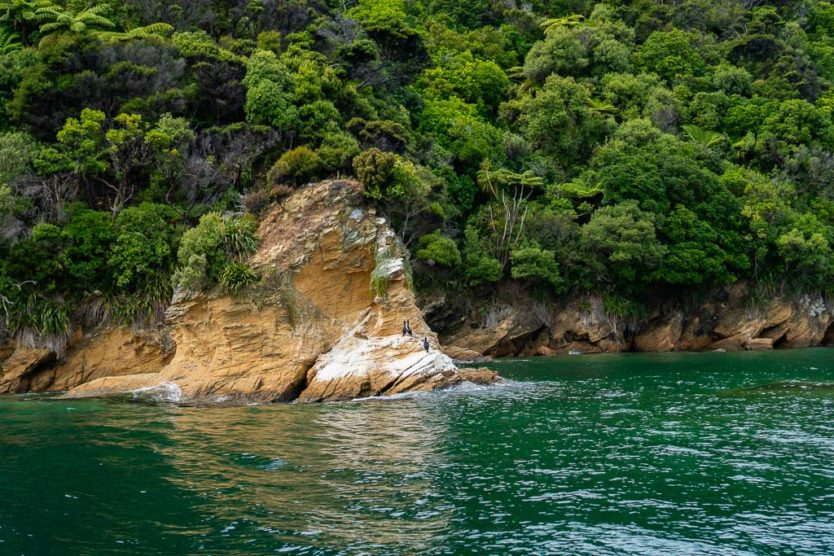 birds on a rock in queen charlotte sound picton mail boat cruise with beachcomber