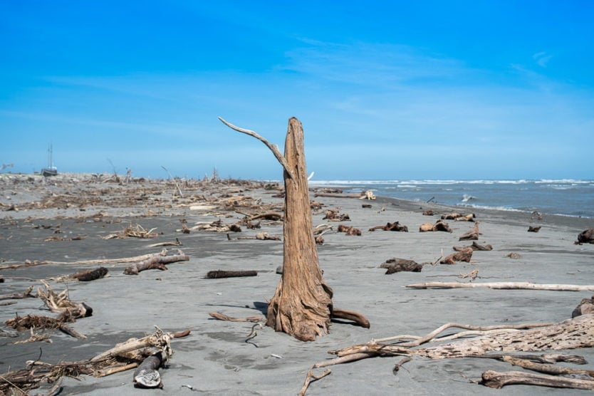 Driftwood on the Hokitika Beach on the way to Hokitika Gorge