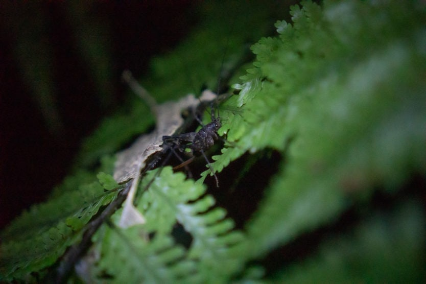One of the many Weta we saw during our private new zealand glow worms tour