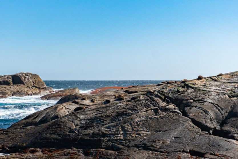 real journeys doubtful sound tour tasman sea seals