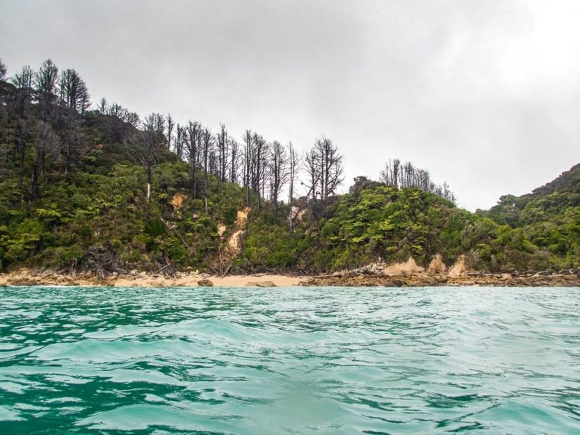 trees on the coast line of abel tasman national park in Shag Harbour