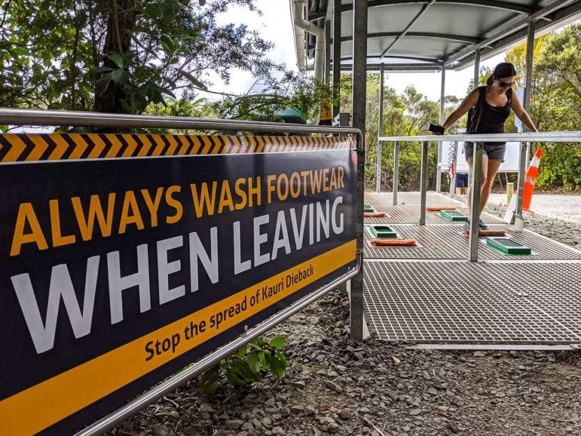 washing feet in waipoua forest trail