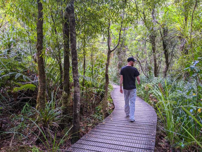 waipou forest trail walking to see the kauri tree in Waipoua forest