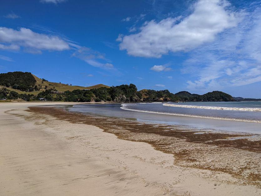 northland beach new zealand road trip