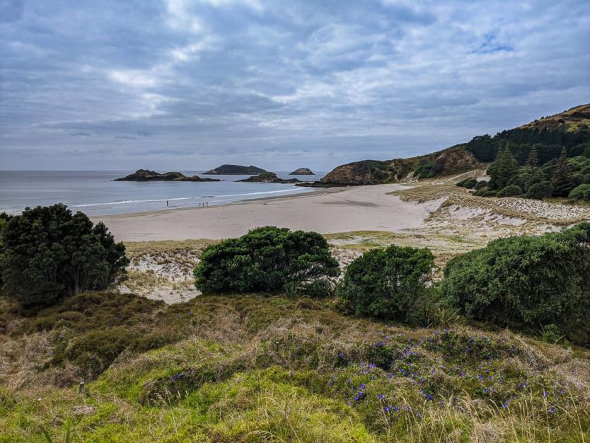 ocean beach in whangarei in northland new zealnad