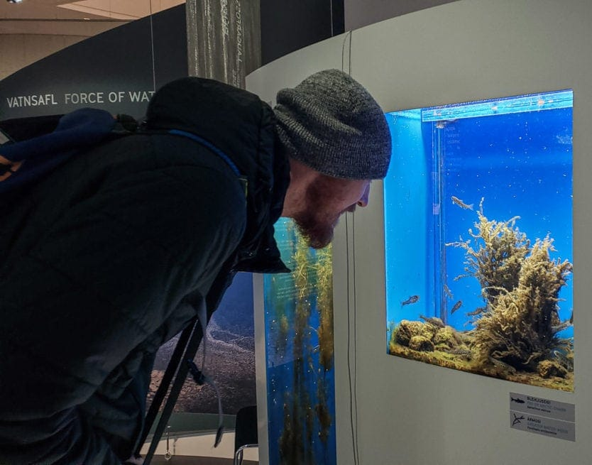 Buddy looking into a fish tank at the perlan museum in reykjavik
