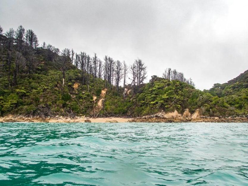 trees on the coast line of abel tasman national park in Shag Harbour