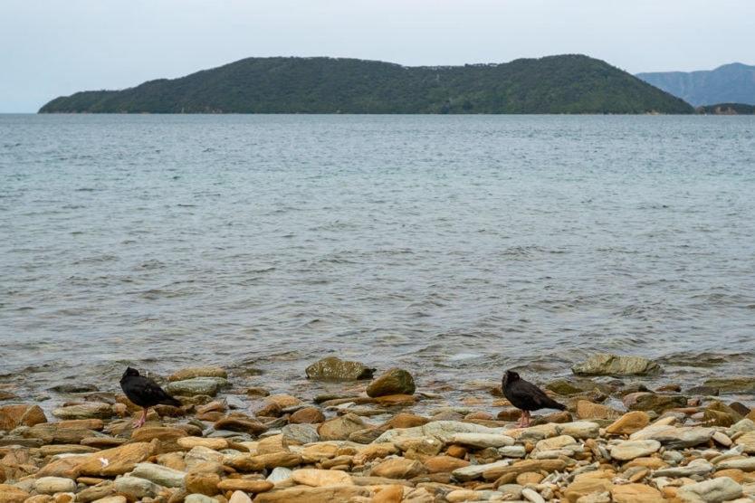 birds on the shoreline of ship cove looking out towards Motuara Island